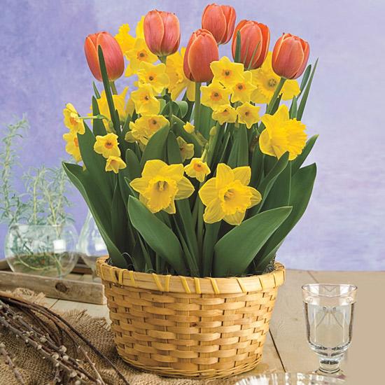 Amber Spring Bulb Basket