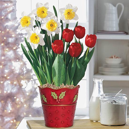 Spring in Winter Bulb Duet
