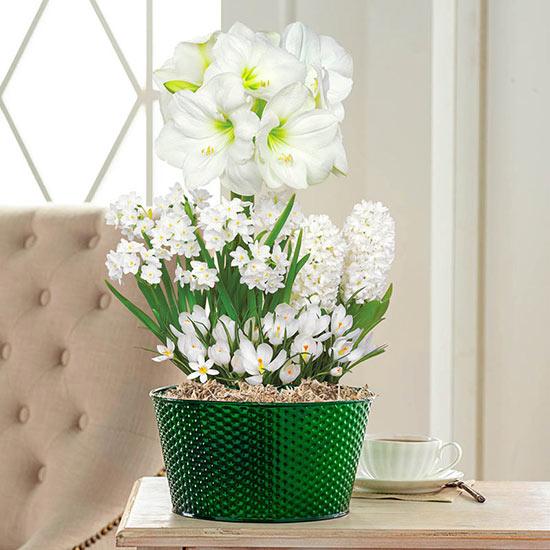 Scented White Bulb Garden