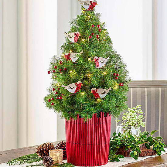 Merry Migration Decorated Spruce Tree