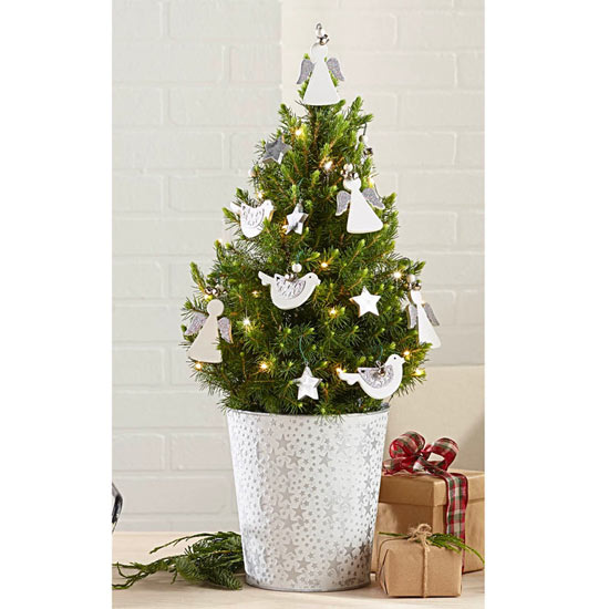 Heavenly Host Potted Spruce
