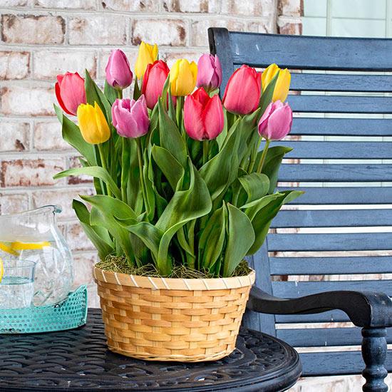 Tulipmania Bulb Garden