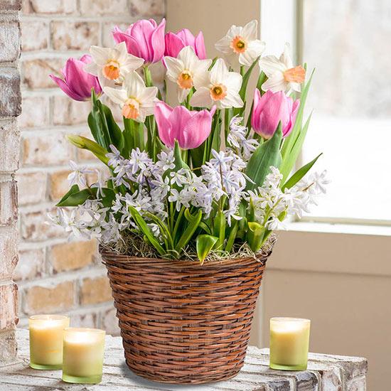 Simple Pleasures Bulb Garden
