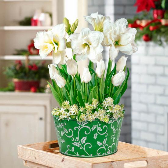 Winter White Bulb Garden