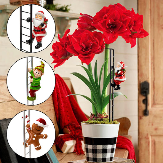 Climbing Character Amaryllis Stakes