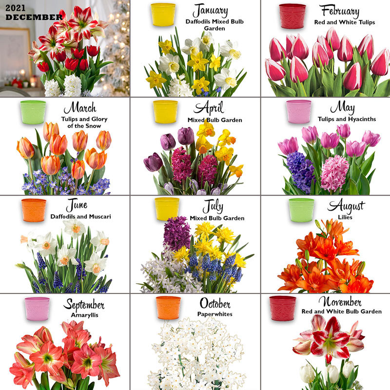 Bulb Garden Of The Month Flower Club