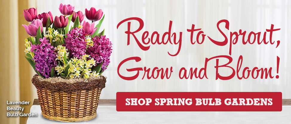Flowering Gifts