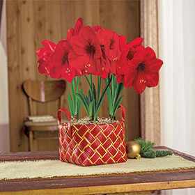 The Symbolism Behind the Amaryllis
