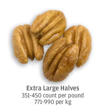 size comparison of extra large pecan halves, 771-990 pecans per kilogram