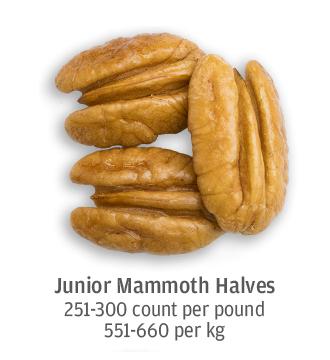 size comparison of junior mammoth pecan halves 551-660 pecans per kilogram