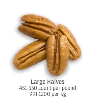 size comparison of large pecan halves, 991-1200 pecans per kilogram