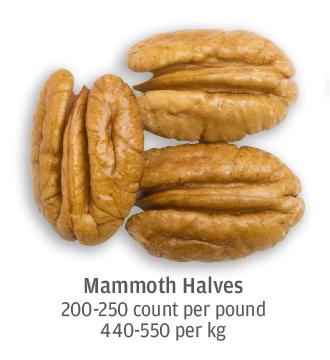 size comparison of mammoth pecan halves, 440-550 per kilogram