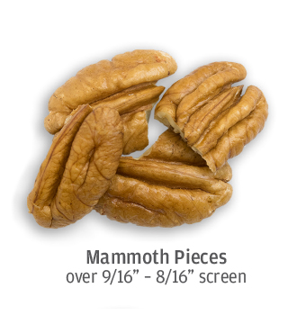size comparison of mammoth pecan pieces, up to 9/16 of an inch in size