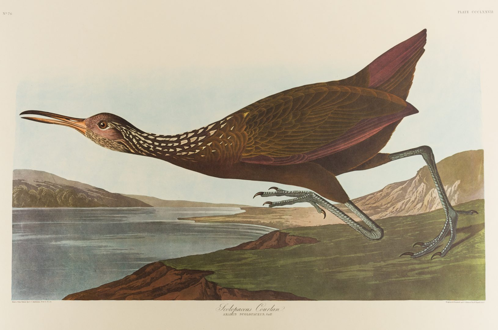 Lot 453: Group of 10 Amsterdam Audubon Prints
