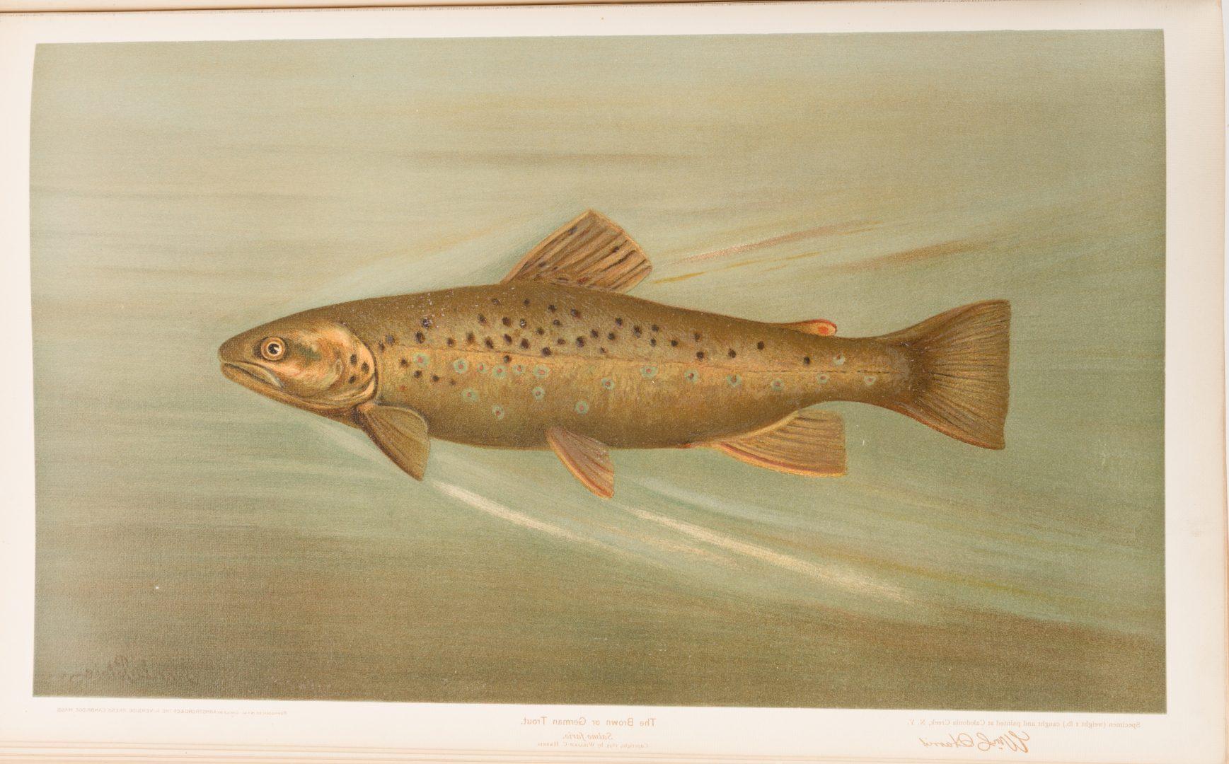 Lot 455: The Fishes of North America, William C. Harris, 1898
