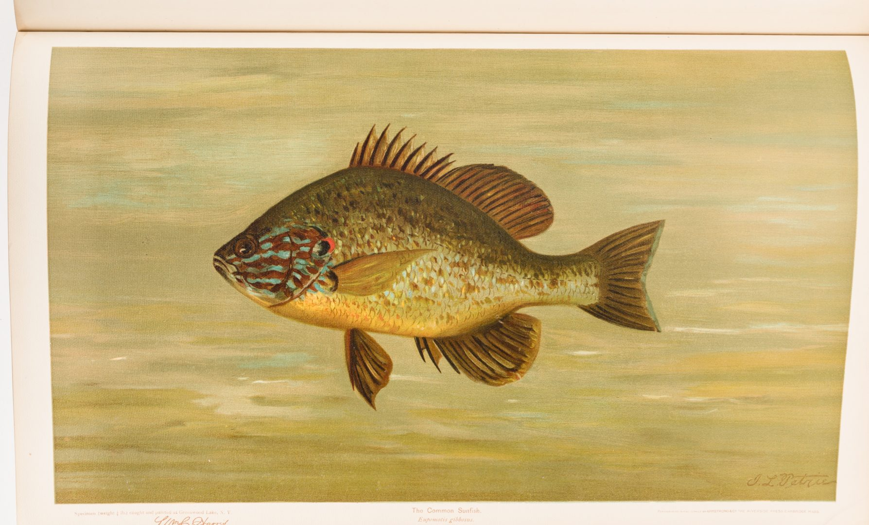 Lot 455: The Fishes of North America, William C. Harris, 1898