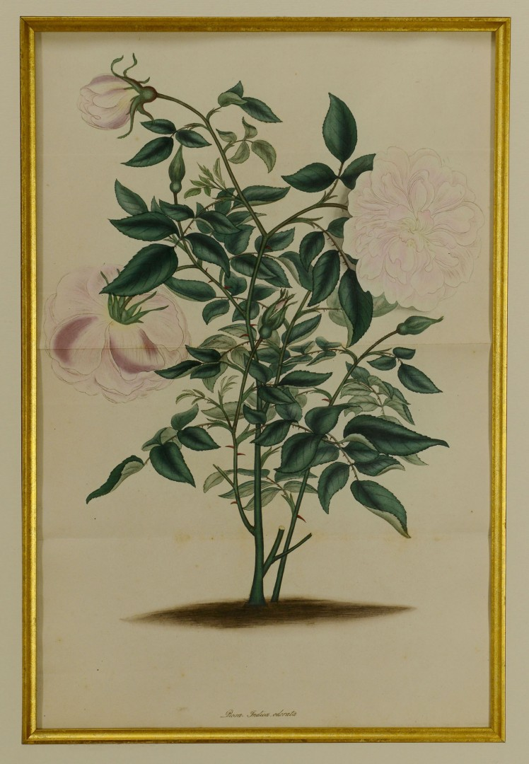 Tapestry remnant and Rose Botanical