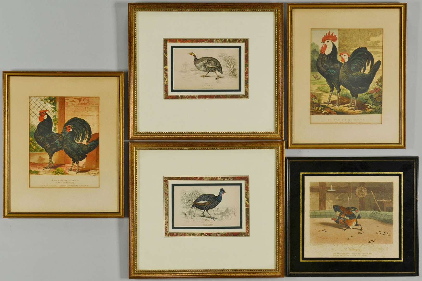 Lot of 5 Chicken & Guinea Fowl Prints