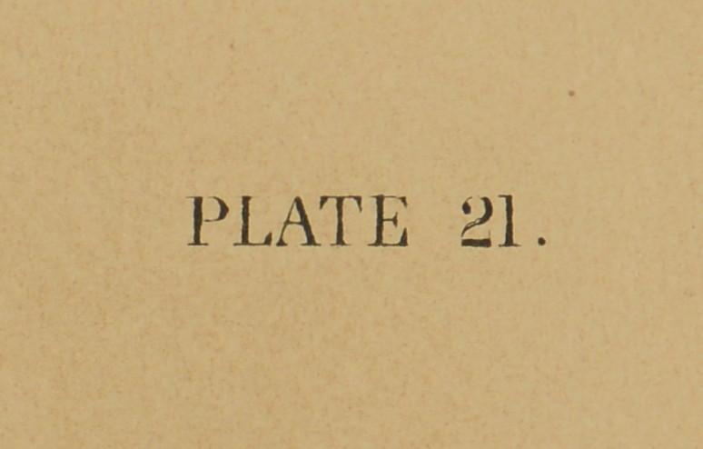 Lot 372: Audubon Chromolithograph by Bien