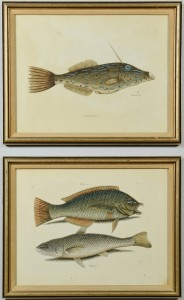 Lot 373: Two Mark Catesby Fish Prints