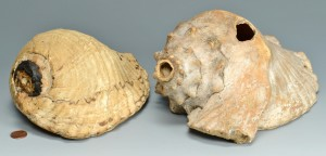 Lot 617: 2 Pre Columbian Shell Trumpets