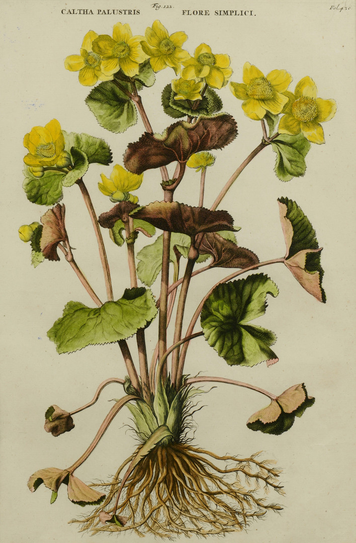 Lot 865: 4 Early Botanical Prints