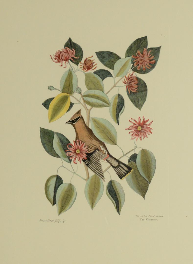 Lot 866: 6 Colonial Williamsburg Reproduction Bird Prints