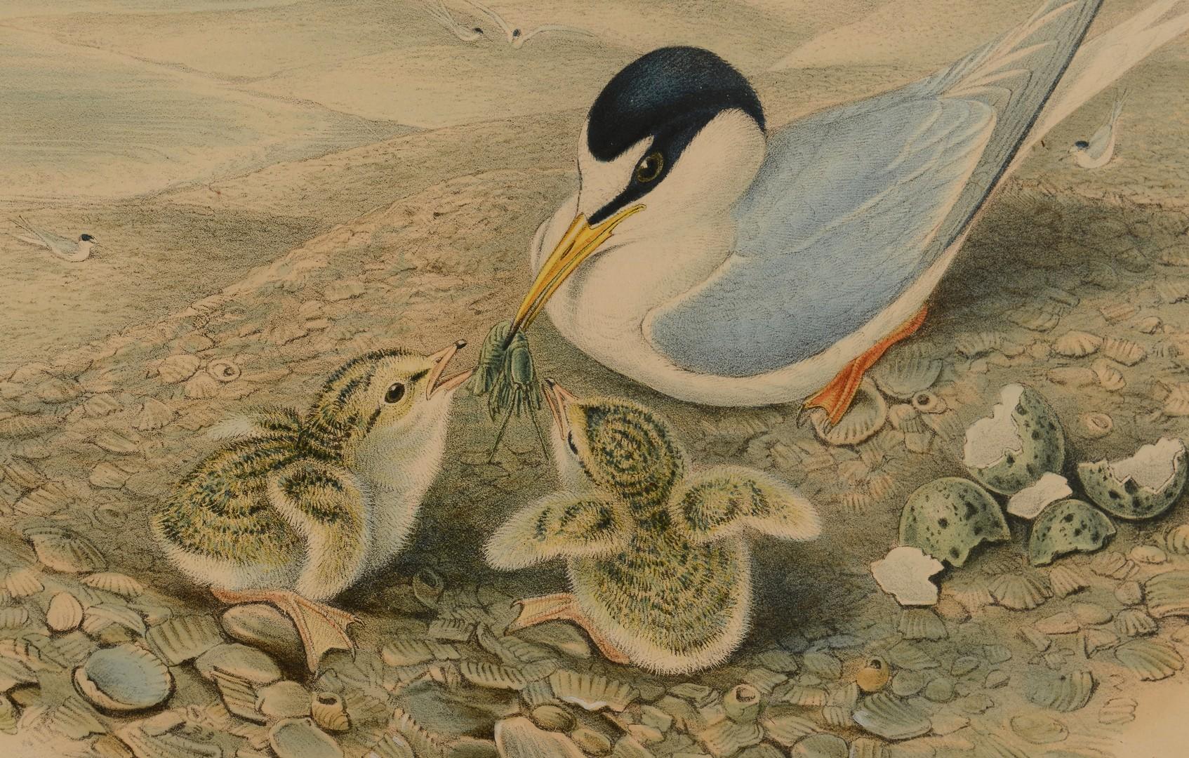 Lot 551: Pr. Gould & Richter & 1 A. Wilson Bird Prints, 3 total