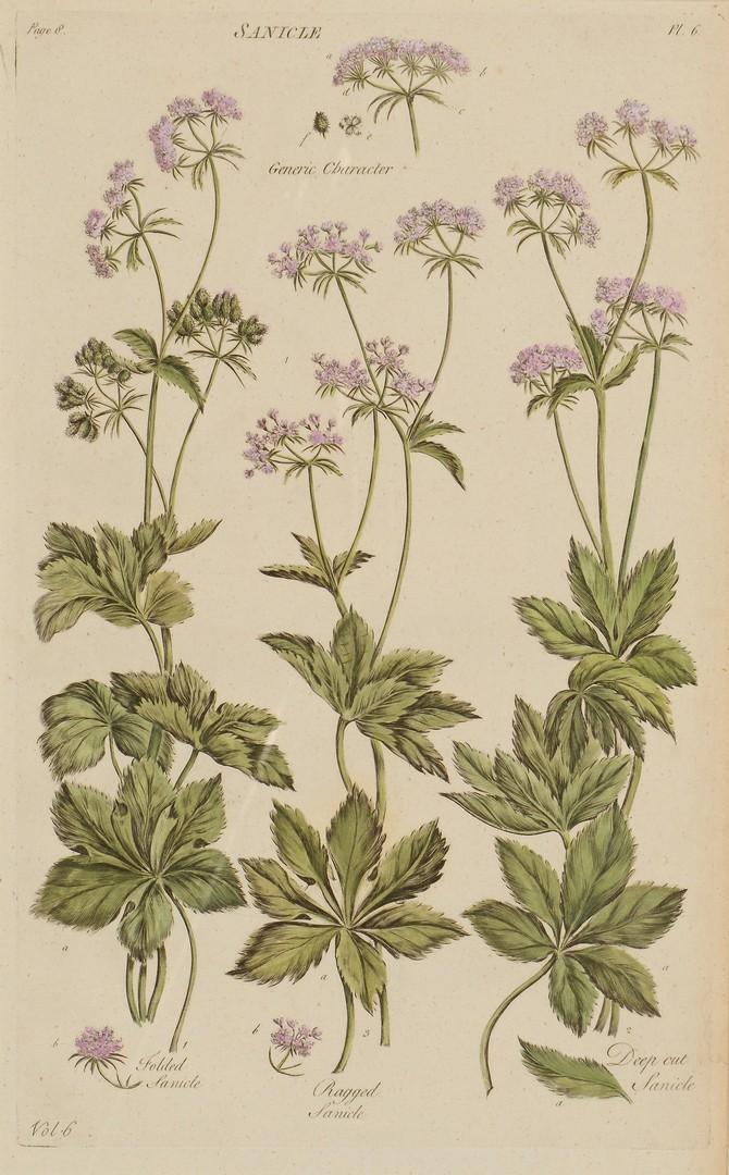 Lot 552: 4 Botanical Engravings after John Hill