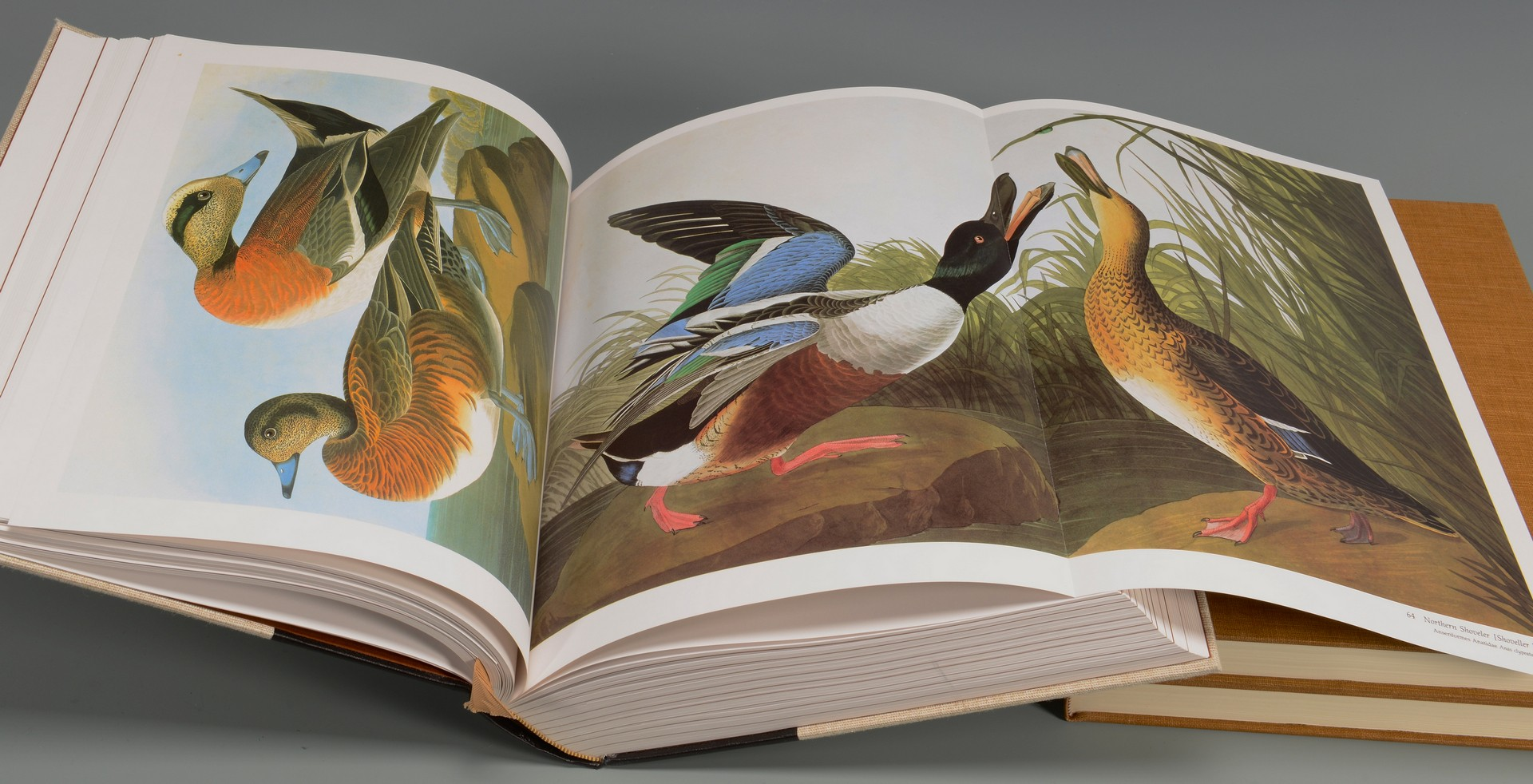 Lot 747: 2 John J. Audubon Illustrated Books