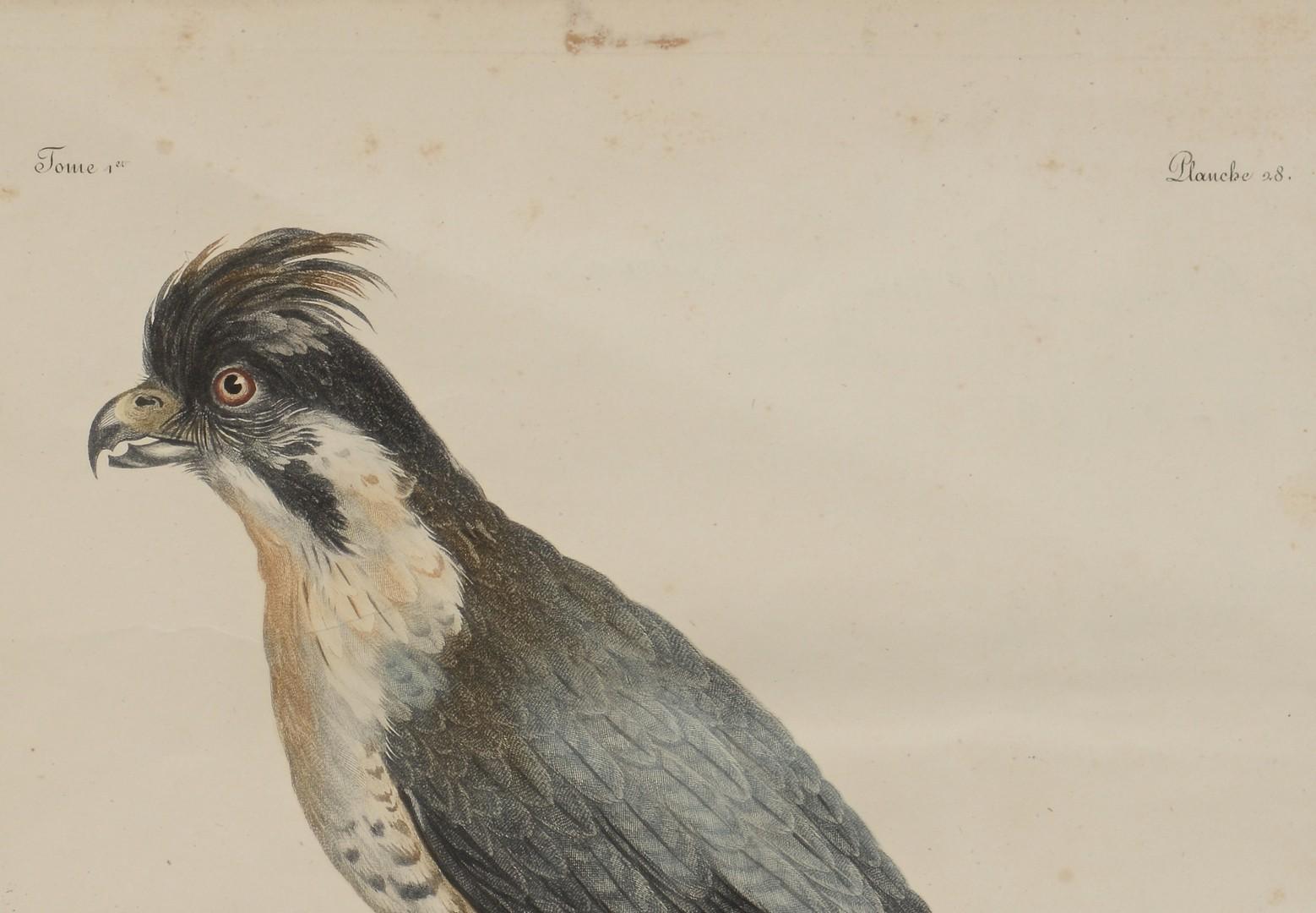Lot 798: Pr C. Fessard Bird Engravings