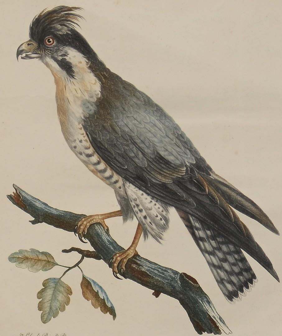 Lot 3832451: Pr C. Fessard Bird Engravings
