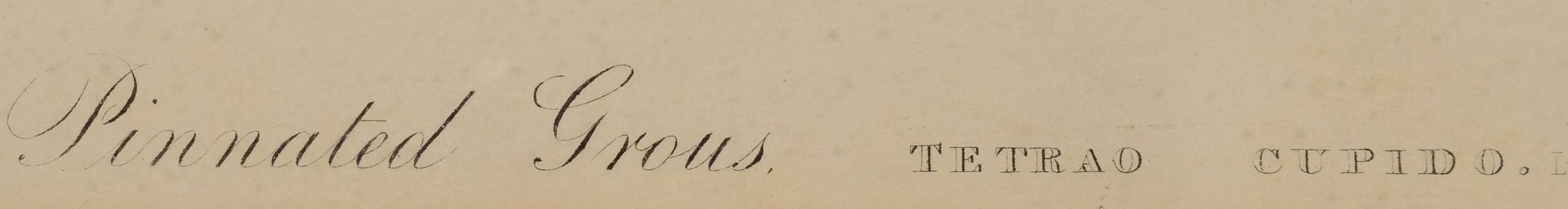 Lot 244: John J. Audubon, Bien Edition, Pinnated Grouse