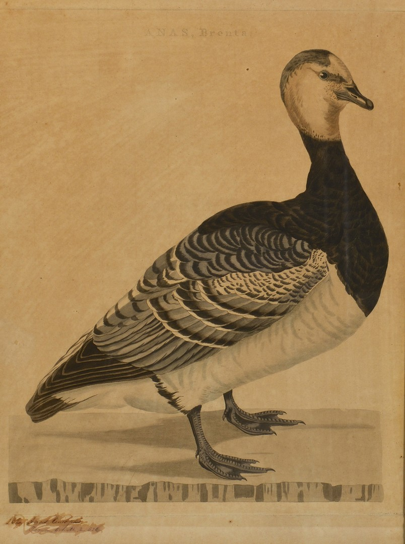 Lot 774: Six 18th & 19th Cent. Fowl Prints