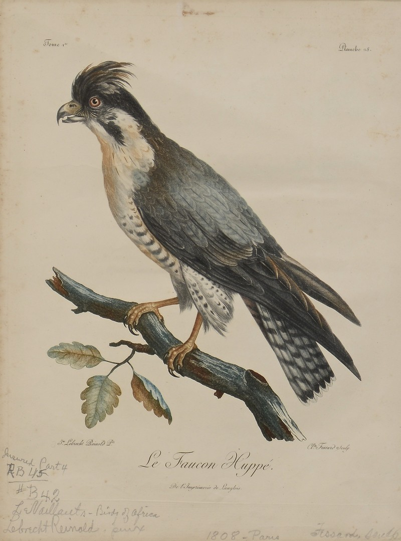 Lot 777: Pr C. Fessard Bird Engravings
