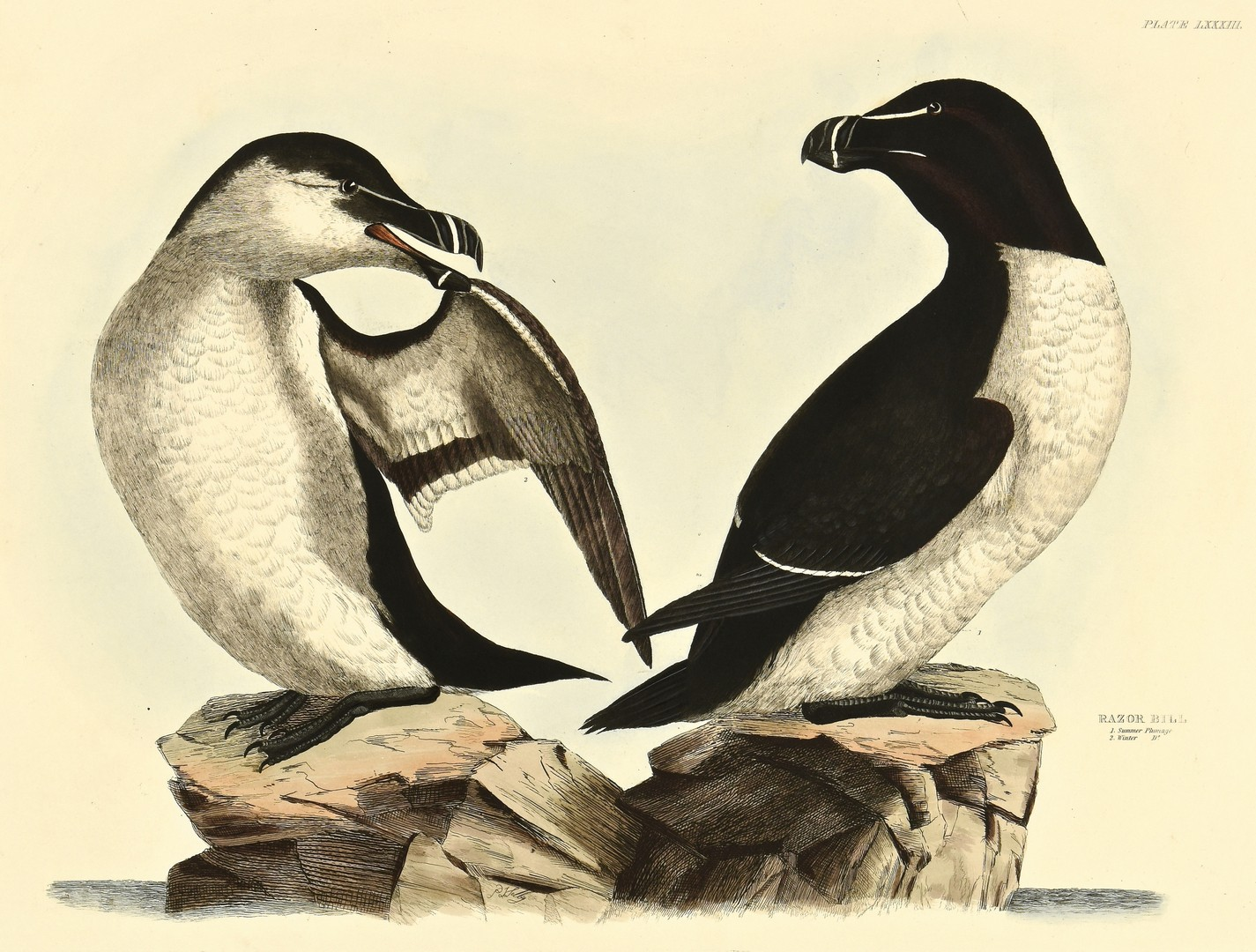 Lot 234: 4 Selby Bird Prints