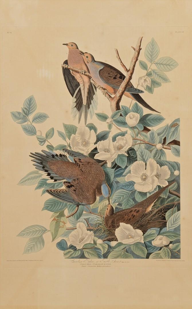 Lot 235: Audubon Havell Ed., Carolina Pigeon or Turtle Dove