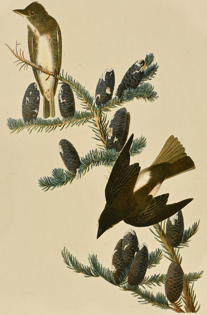 Lot 236: 3 Bird Prints, Gould, Audubon and Wilson.