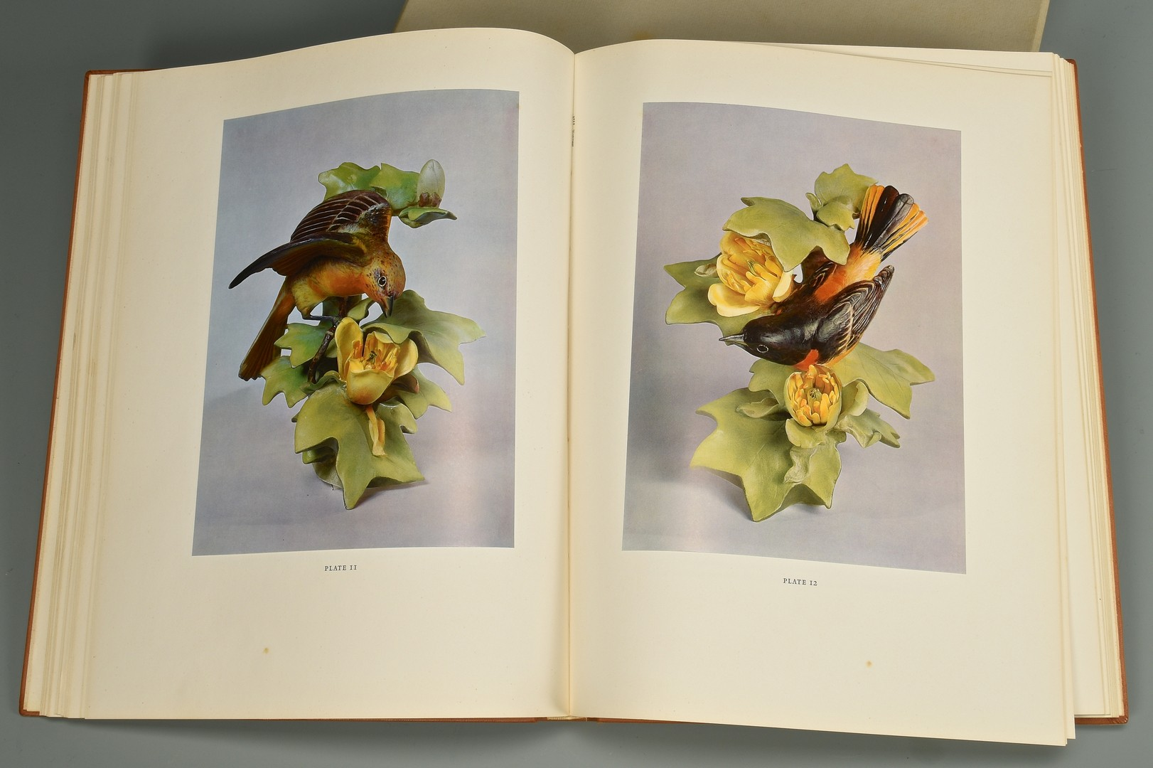 Lot 595: Pair Dorothy Doughty Mountain Bluebirds and Dought