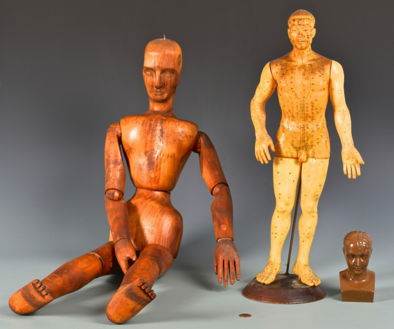Lot 822: 3 Male Form Teaching/Medical Models