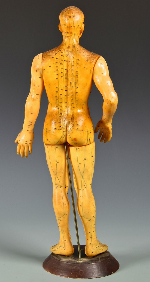 Lot 822: 3 Male Form Teaching/Medical Models