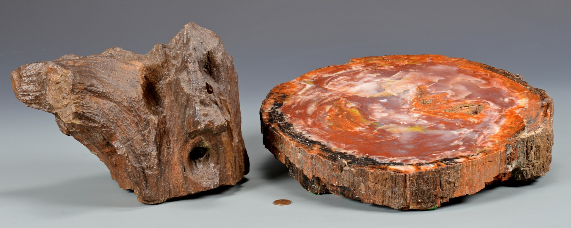 Lot 864: 2 Petrified Wood Pcs, Including Agatized Cross Sec
