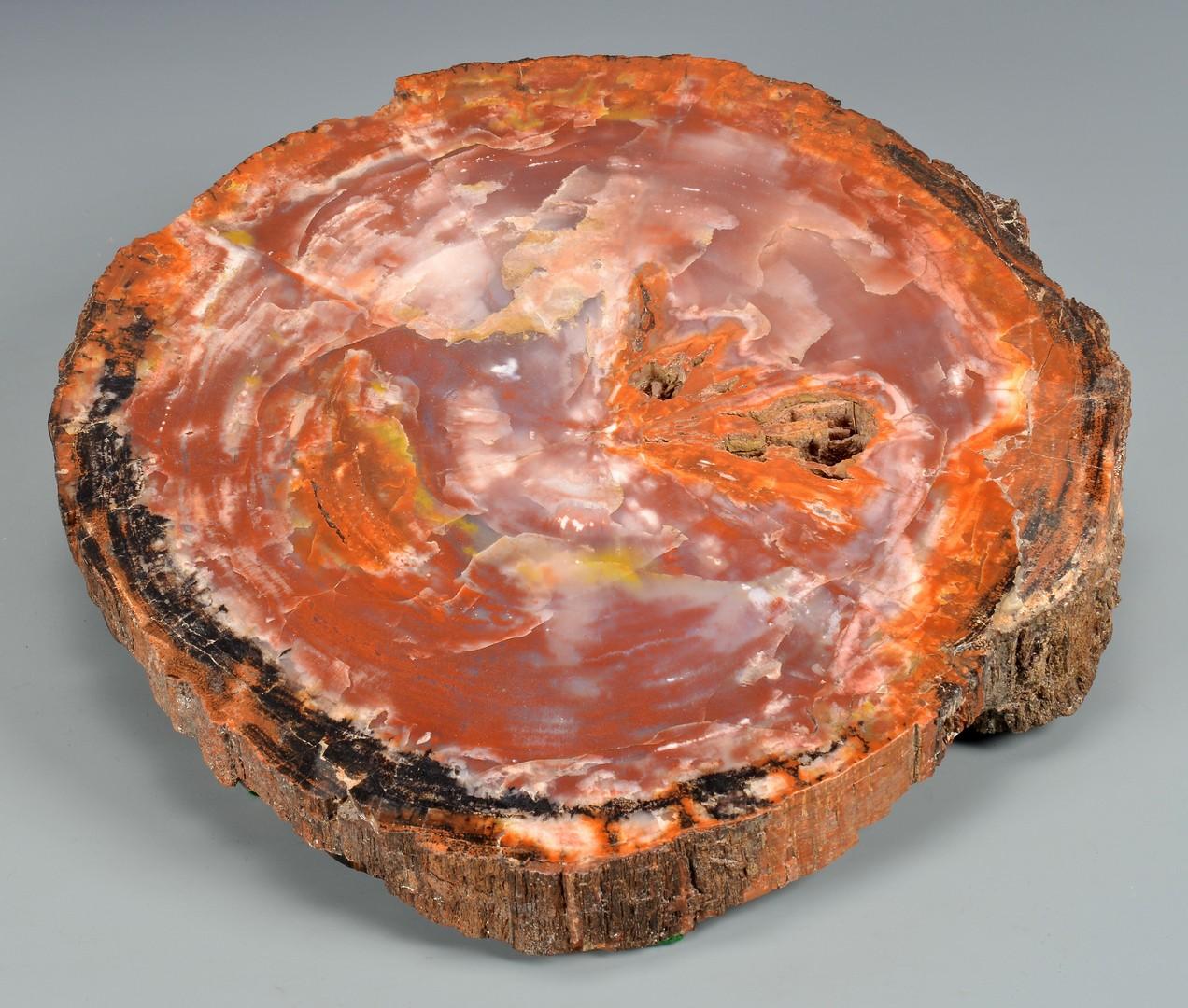 Lot 864: 2 Petrified Wood Pcs, Including Agatized Cross Sec