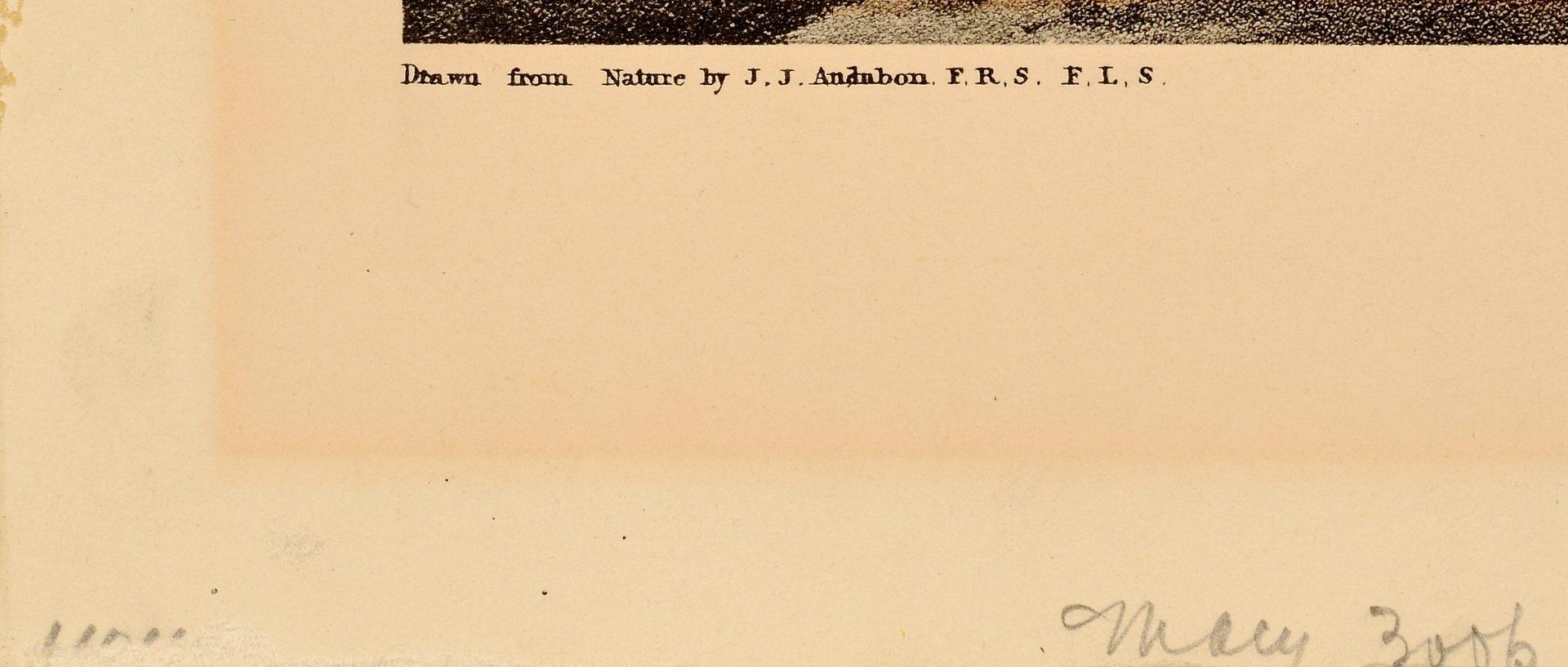 Lot 106: After Audubon, Long Billed Curlew