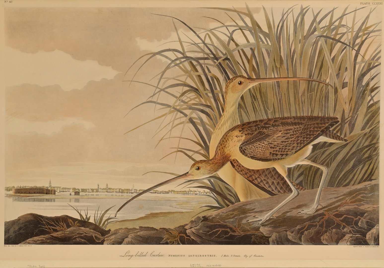 Lot 106: After Audubon, Long Billed Curlew
