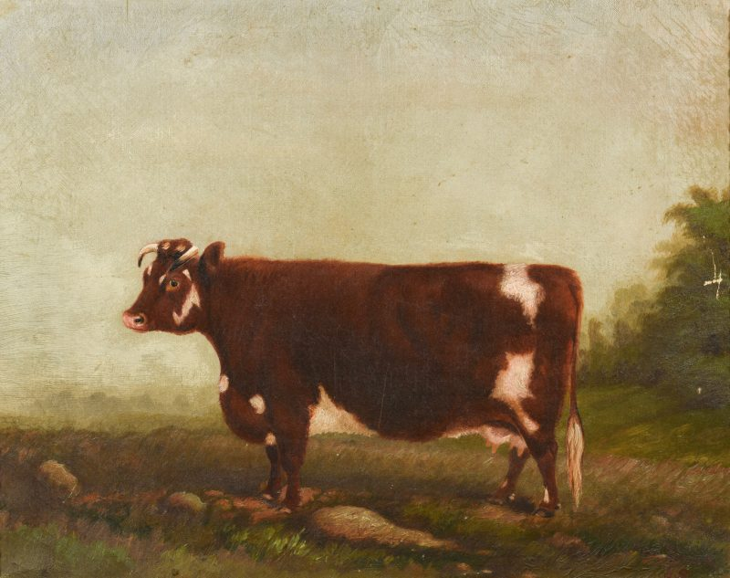 Lot 219: 19th c. Portrait of a Prize Cow, Devon Farm