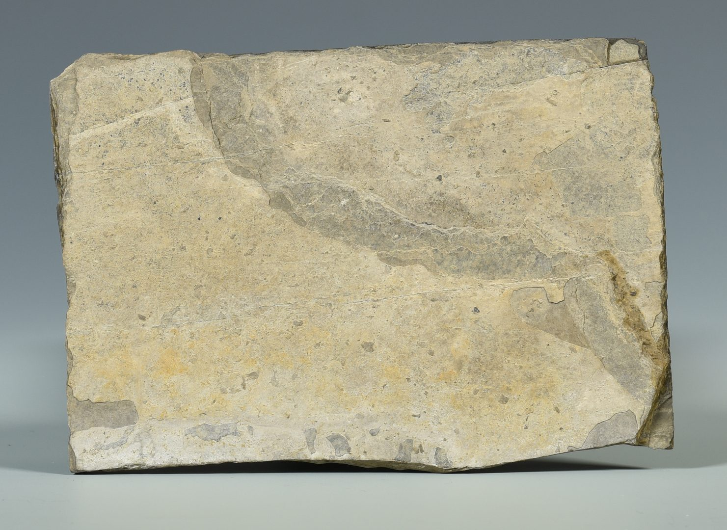 Lot 881: Therapod Dinosaur Fossil