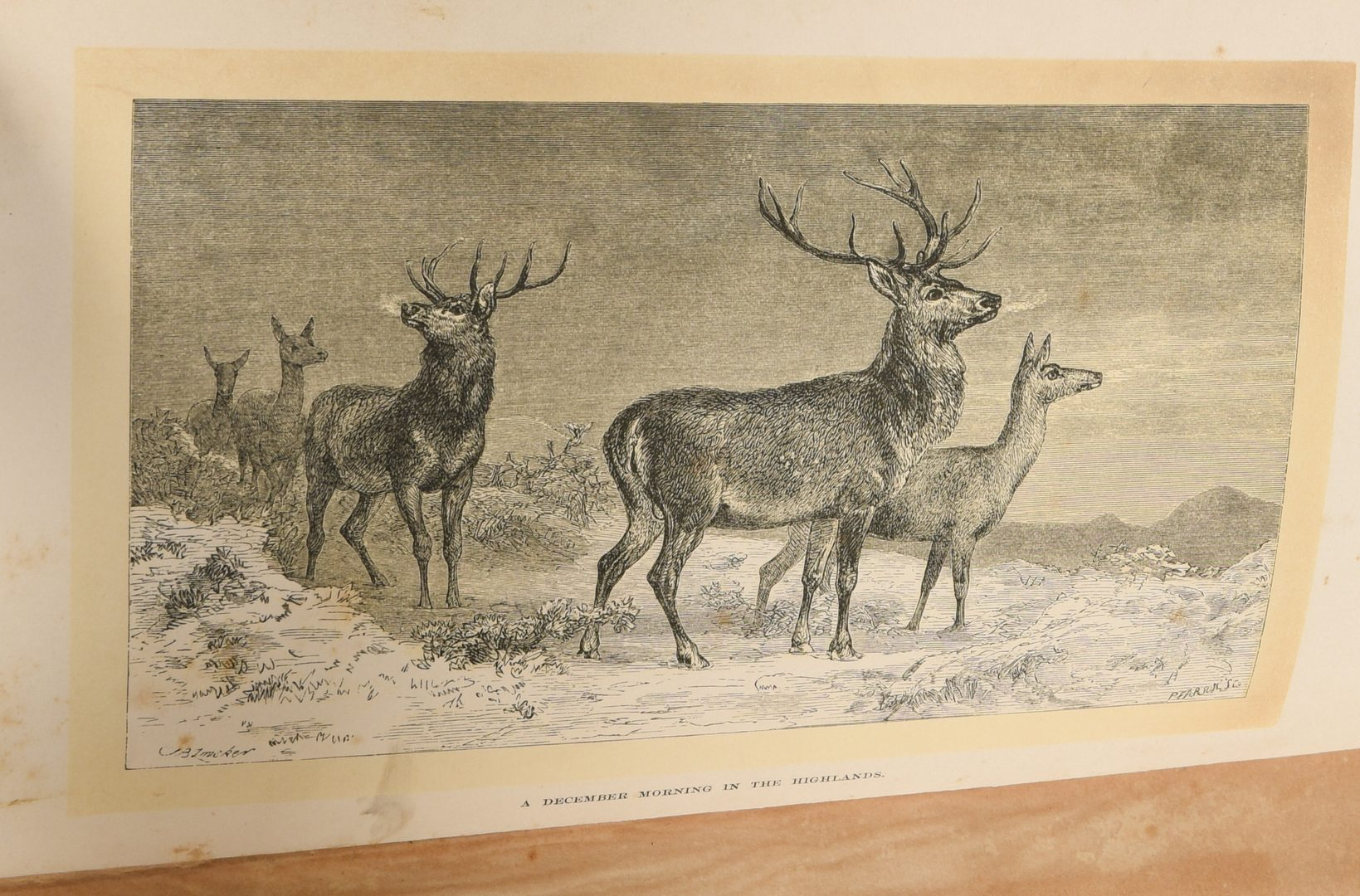 Lot 896: 5 Hunting and Fishing Books, 19th c.
