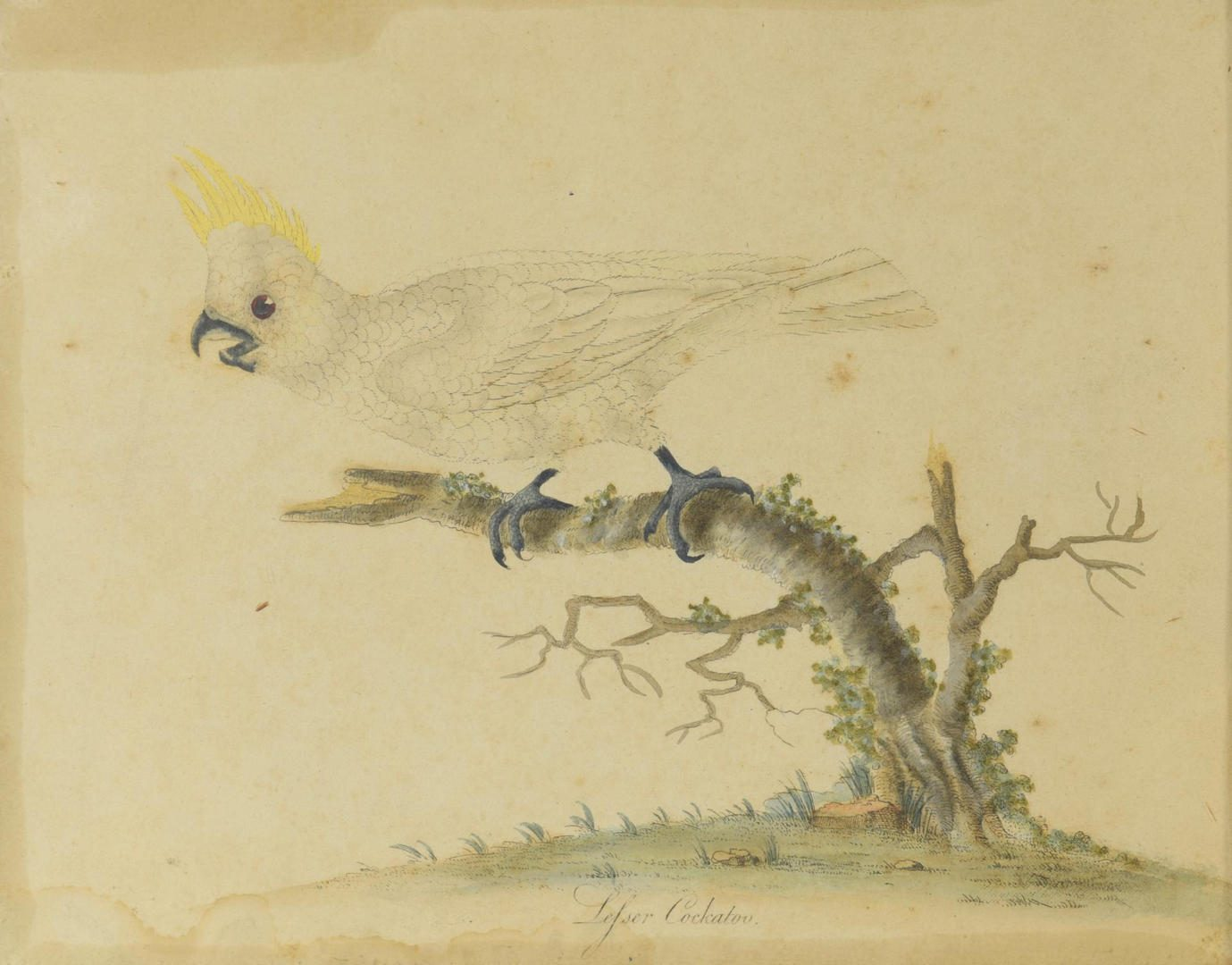 Lot 100: 2 Art Images of Birds, O/C and Engraving