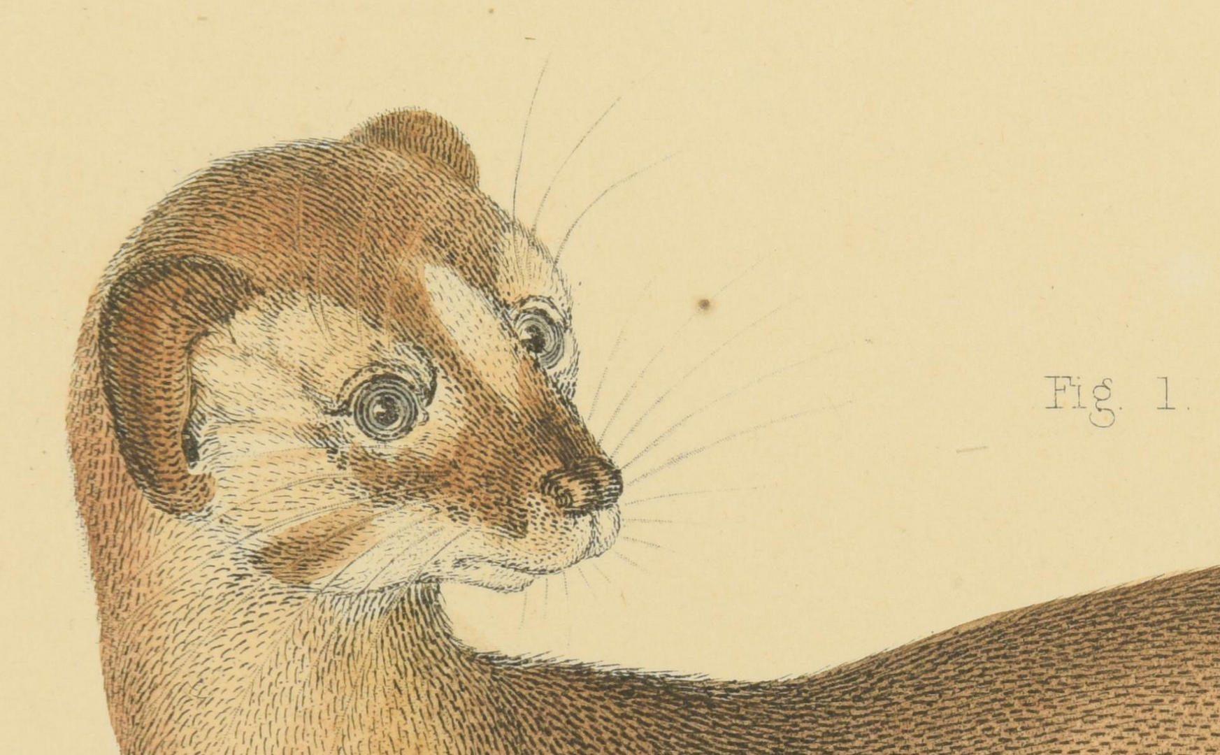 Lot 94: 4 19th c. Prints,  1 Audubon